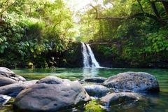 Caídas más bajas de Waikamoi de la cascada tropical y una pequeña charca cristalina, dentro de una selva tropical tropical densa, Imágenes de archivo libres de regalías