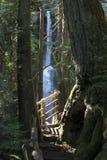Caídas olímpicas de Marymere del parque nacional Foto de archivo