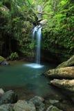 Caídas y piscina del EL Yunque Imagenes de archivo