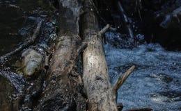 Caído abre una sesión un río en el verano imagenes de archivo