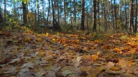 Caído da folha das árvores Movimento lento filme