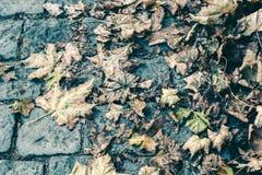 Caído e secado acima das folhas de outono encontre-se em um pavimento de pedra, o c imagens de stock