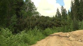 Caído no abeto vermelho da estrada 4K vídeos de arquivo