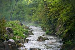 CaÑŒyanka瀑布的森林 免版税库存照片