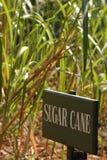 Caña de azúcar Imagen de archivo libre de regalías