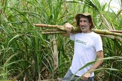 Caña de azúcar del granjero que lleva orgánico Imagen de archivo
