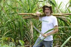 Caña de azúcar del granjero que lleva orgánico Imagenes de archivo