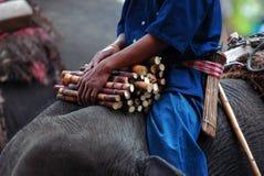 Caña de azúcar en elefante. Foto de archivo libre de regalías