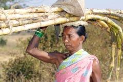 Caña de azúcar tribal del carryng de la mujer Foto de archivo