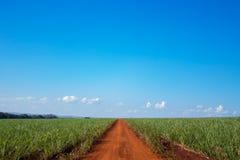 Caña de azúcar y camino Foto de archivo libre de regalías
