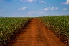 Caña de azúcar y camino Fotos de archivo