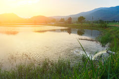 Caña de azúcar y sol amonestadores del río del soporte Fotos de archivo libres de regalías