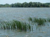 Caña del área de la reserva natural del ³ del tà de Tisza y segde y árboles Imagenes de archivo