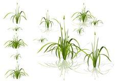 Caña del vector Plantas de agua en diversas variantes con las sombras stock de ilustración