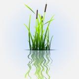 Caña del verde de hierba libre illustration