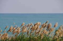 Caña en la playa Fotos de archivo libres de regalías