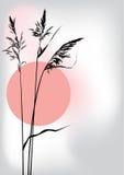 Caña en la puesta del sol ilustración del vector