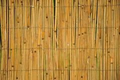 Caña seca Foto de archivo