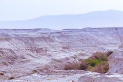 Cañada del desierto con la vegetación en la puesta del sol Foto de archivo
