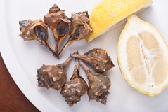 Cañaillas. The sea snails on some shellfish served cold after being seasoned with lemon Stock Image