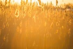 Cañas, bastón, puesta del sol fotos de archivo