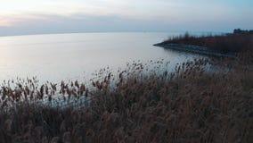 Cañas cercanas aéreas en la costa del mar en la puesta del sol almacen de metraje de vídeo