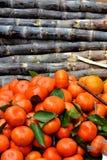Cañas de azúcar y naranja Imagen de archivo libre de regalías