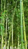 Cañas de bambú Foto de archivo libre de regalías