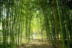 Cañas de bambú Fotografía de archivo