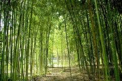 Cañas de bambú Imagen de archivo libre de regalías