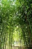 Cañas de bambú Imagenes de archivo