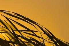 Cañas de la salida del sol en el viento Fotos de archivo libres de regalías