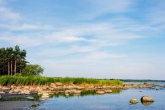 Cañas del matorral en la costa Fotos de archivo