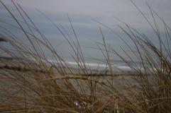 Cañas del océano fotografía de archivo