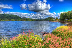 Cañas e hierbas coloridas por Ullswater el distrito Cumbria Inglaterra Reino Unido del lago con el cloudscape HDR imagen de archivo libre de regalías