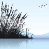 Cañas en el agua Imagen de archivo libre de regalías