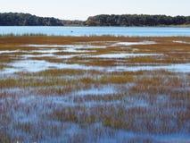 Cañas en el agua Fotografía de archivo