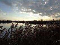 Cañas en el lago Fotos de archivo libres de regalías