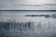 Cañas en el lago Foto de archivo