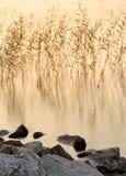 Cañas en el lago en la puesta del sol Fotografía de archivo