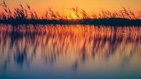 Cañas en el lago en la puesta del sol Fotos de archivo libres de regalías