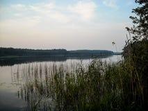 Cañas en el río temprano por la mañana fotografía de archivo