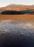Cañas en invierno, lago Slapin, Skye, Escocia Foto de archivo libre de regalías
