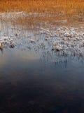 Cañas en invierno, lago Slapin, Skye, Escocia Fotografía de archivo