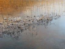 Cañas en invierno, lago Slapin, Skye, Escocia Imagen de archivo