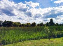 Cañas en la orilla del río y el cielo nublado Fotos de archivo libres de regalías