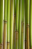 Cañas verdes Fotografía de archivo libre de regalías