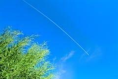 Cañas verdes debajo de una estela de vapor en el cielo azul Fotos de archivo