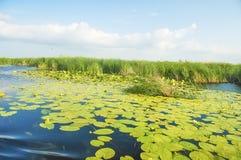 Cañas verdes en el agua azul Imagenes de archivo