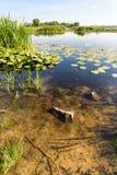 Cañas y lirios de agua en el río Fotos de archivo
